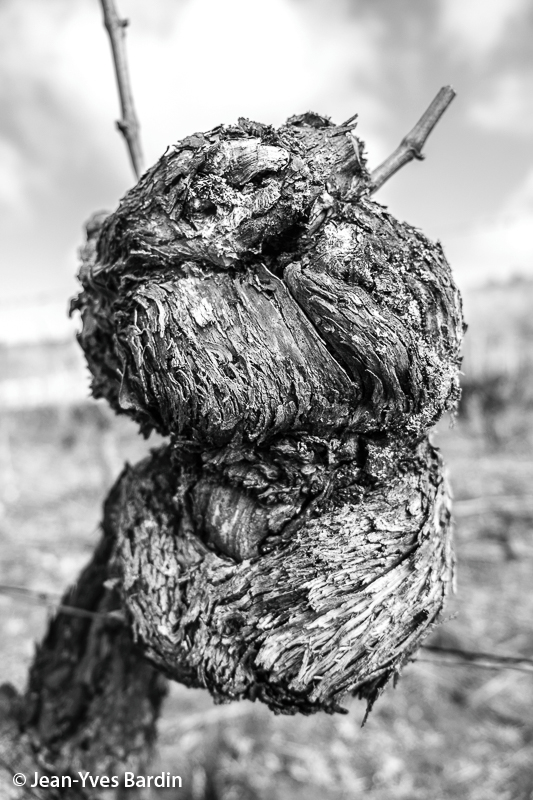 Jean Yves Bardin, photographe des vignobles